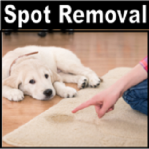 Pet Odor and Stain Removal